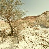Tree in Desert — Stock Photo