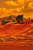 Wheat Fields — Stock Photo