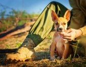 Il cucciolo — Foto Stock