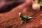 The lizard on a sand — Stock Photo