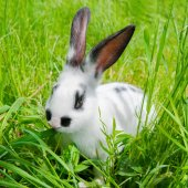Rabbit sitting in grass, smiling at camera — Stock Photo