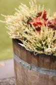 Heather plants — Stock Photo