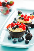Berries tarts — Stock fotografie
