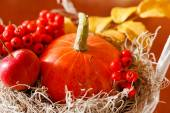 Decorazione autunnale — Foto Stock