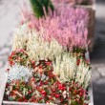 Autumn flowers — Stock Photo #54465921