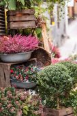 Small flower shop — Stock Photo
