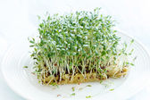 Fresh green watercress — Stock Photo