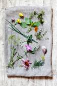 Medicine herbs — Stock Photo