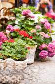 Nice flowers outdoor — Stock Photo
