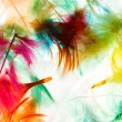 Colorful feathers — Stock Photo #55332045