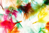 Colorful feathers — Stock Photo
