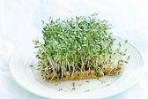 Watercress  on plate — Stock Photo