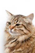 Nice tabby cat — Stock Photo