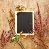 Plants and chalkboard — Stock Photo