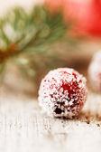 Christmas berry — Stockfoto