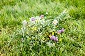 Bright wildflowers — Stock Photo