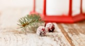 Christmas berry — Stockfoto