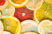 Different citrus slices — Stockfoto