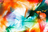 Orange and green feathers — Foto Stock