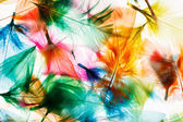 Colorful feathers background — Stock Photo