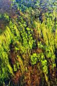 Algae in river — Stock Photo