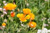 Wild flowers field — Stock Photo