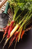 Fresh colorful carrots — Stockfoto