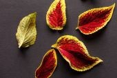 Red and green leaves — Stock Photo