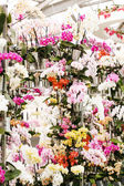 Orchid flowers in pots — 图库照片