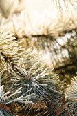 Tanne mit Frost auf Nadeln — Stockfoto