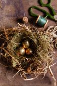 Gyllene ägg i boet — Stockfoto
