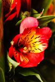 素敵な花の花束 — ストック写真