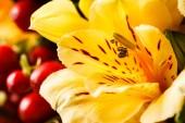 Nice yellow flowers — Foto de Stock