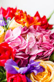 Bunch of colorful flowers — Stock Photo