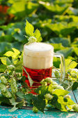 Green hops with beer — Stock Photo