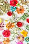 Different bright flowers — Stock Photo