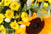 Nice yellow flowers — Stock Photo