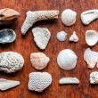 Small shells collection — Stock Photo #68308077