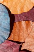 Colorful leaves background — Stock Photo