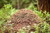 Big anthill with colony of ants — Stock Photo