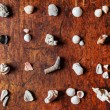 Small shells collection — Stock Photo #69880877
