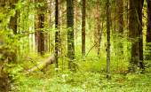 Spring green forest — Stock Photo