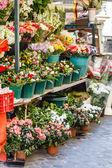 Flowers in flower shop — Stock Photo