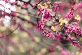 Spring blooming tree — Stock Photo