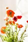 ペルシャのキンポウゲの花 — ストック写真