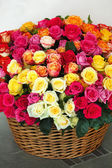 Bright colorful roses — Stock Photo