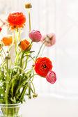Flores de buttercup persa — Fotografia Stock