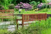 Panchine nel parco estivo — Foto Stock
