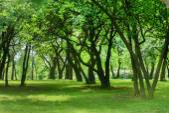 Summer green garden — Stock Photo