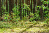 Green dense forest — Stock Photo